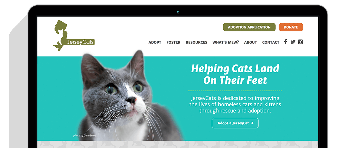 jerseycats.org homepage in a laptop