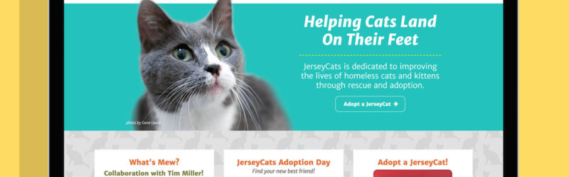 JerseyCats Website in a laptop